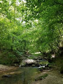 Fishing Creek 4.jpg
