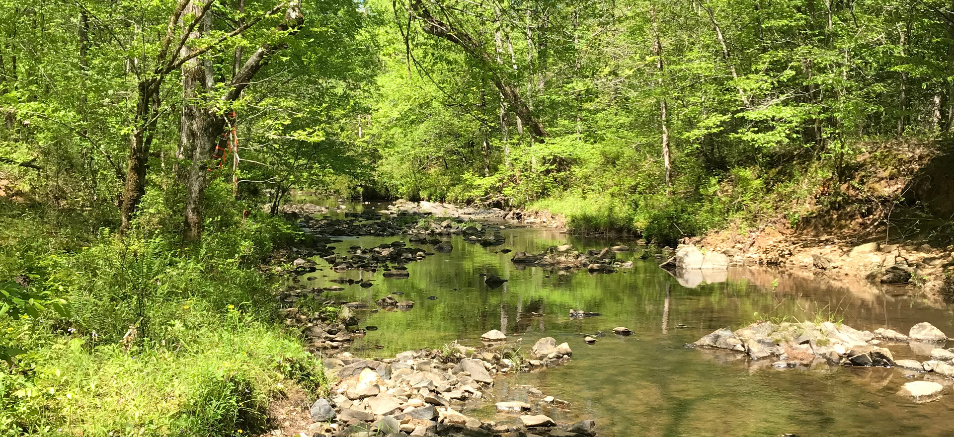 This 151-acre property protects a tributary of Coody Creek, with mesic hardwoods and pine forests managed with fire for wildlife habitat and species diversity. Frequent fire management supports diverse wildlife, including turkeys and coveys of quail.