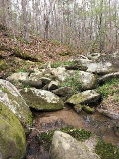 Oglethorpe Family Chooses Conservation Over Development