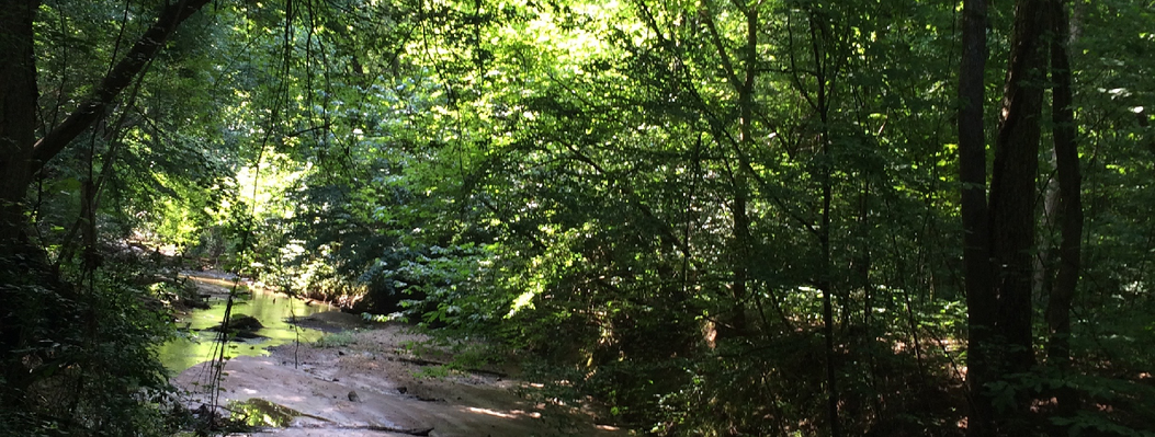 Canebrakes and bottomland hardwood forests along a creek are protected on this 148-acre property, which also supports agriculture, pine forests, and oak-hickory-pine forests.