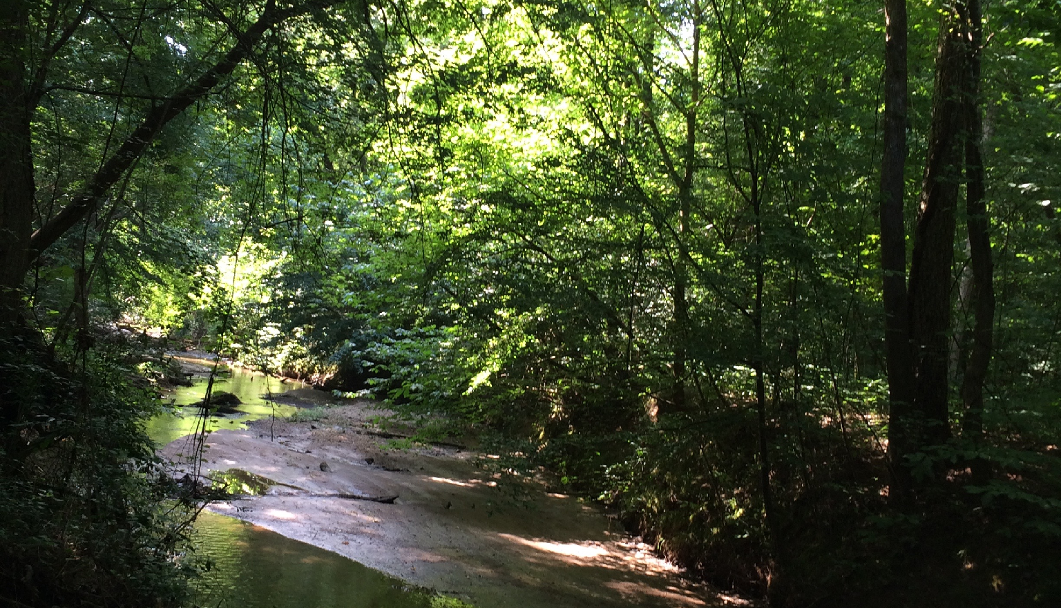 This 148 acre property consists of pasture, as well as natural pine, oak-hickory-pine and bottomland hardwood forests with canebrakes along Sugar Creek.