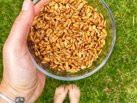 🧂 Salt + Vinegar Sunflower Seeds! 🌻
