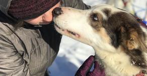 Dogsledding: Maine Adventure #3