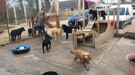 Half Term Madness! It's the most dogs we