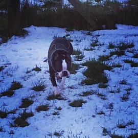 It's been a snowy few days #dogboarding