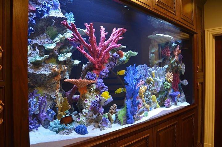 Artificial Coral Reef Insert Ontario Ca West Coast Creations Inc