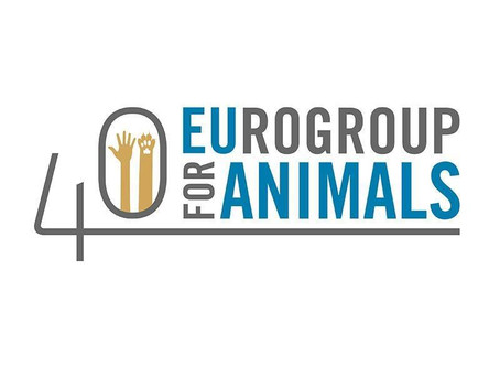 Ανοικτή επιστολή του Eurogroup for Animals για την πανδημία και την κακοποίηση των ζώων