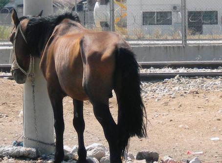 Ημερομηνία εκδίκασης κακοποιητή - Case of the equines abuser is set to be heard