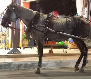 """""""Δεν κατέστη δυνατός ο εντοπισμός του υποσιτισμένου αλόγου στην Ζάκυνθο"""""""