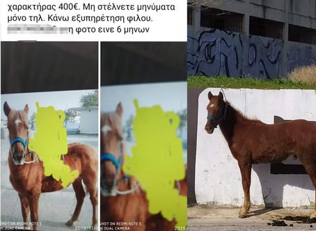 Αλήθειες για το εμπόριο ιπποειδών- Let's talk about equine trade in Greece