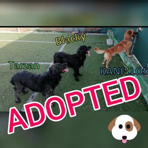 Υιοθετήθηκαν!!! ~ All dogs are adopted