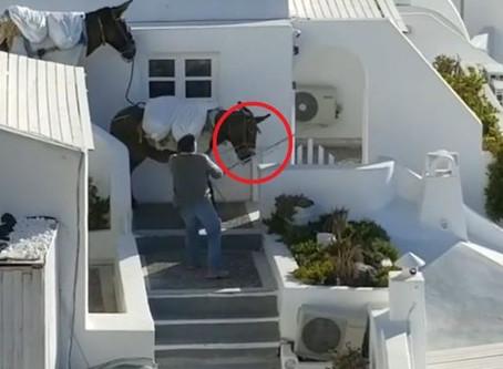 Νομοθεσία και ιπποειδή στην Ελλάδα - Legislation for equines in Greece