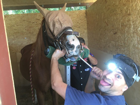 Happy equine dental day