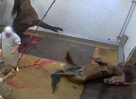 Απαγόρευση σφαγής ιπποειδών – Ban horse slaughter