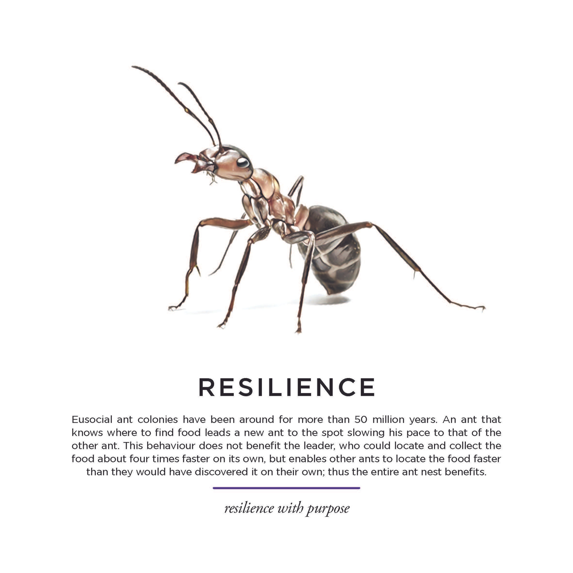 Gryphon_Miscelany-05_Resilience.jpg