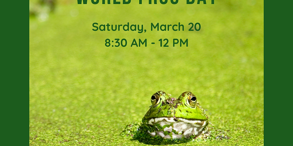 Hop to it on World Frog Day!