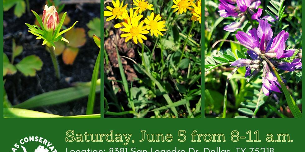 Restore pollinator habitat with Friends of the Warren Ferris Cemetery in Dallas