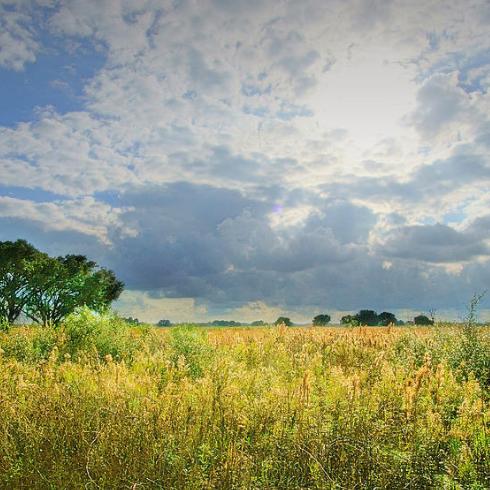 Restore wildlife habitat with Seabourne Creek Nature Park