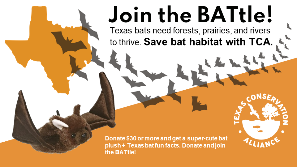 Join the Bat-tel! Texas bats needs forests, prairies, and rivers to thrive. Give $30 and get a super cute bat plush and TX bat facts.