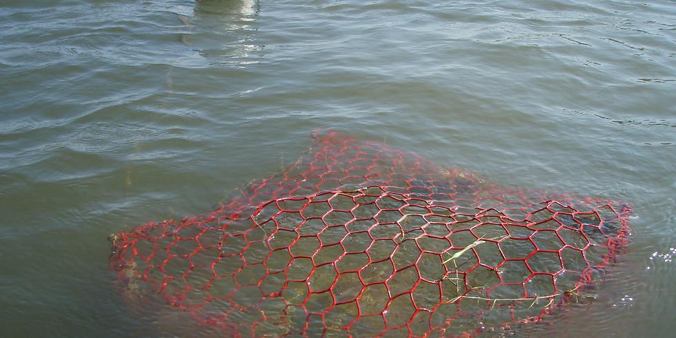 Remove abandoned crab traps from San Antonio Bay