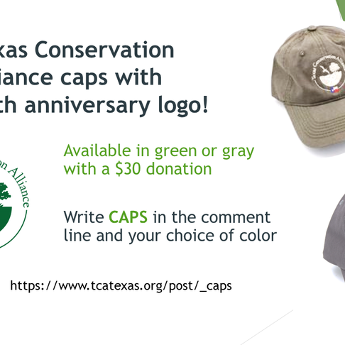 Purchase Your TCA Cap!
