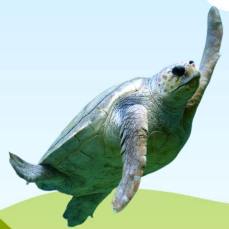 Adopt a Kemp's Ridley Sea Turtle
