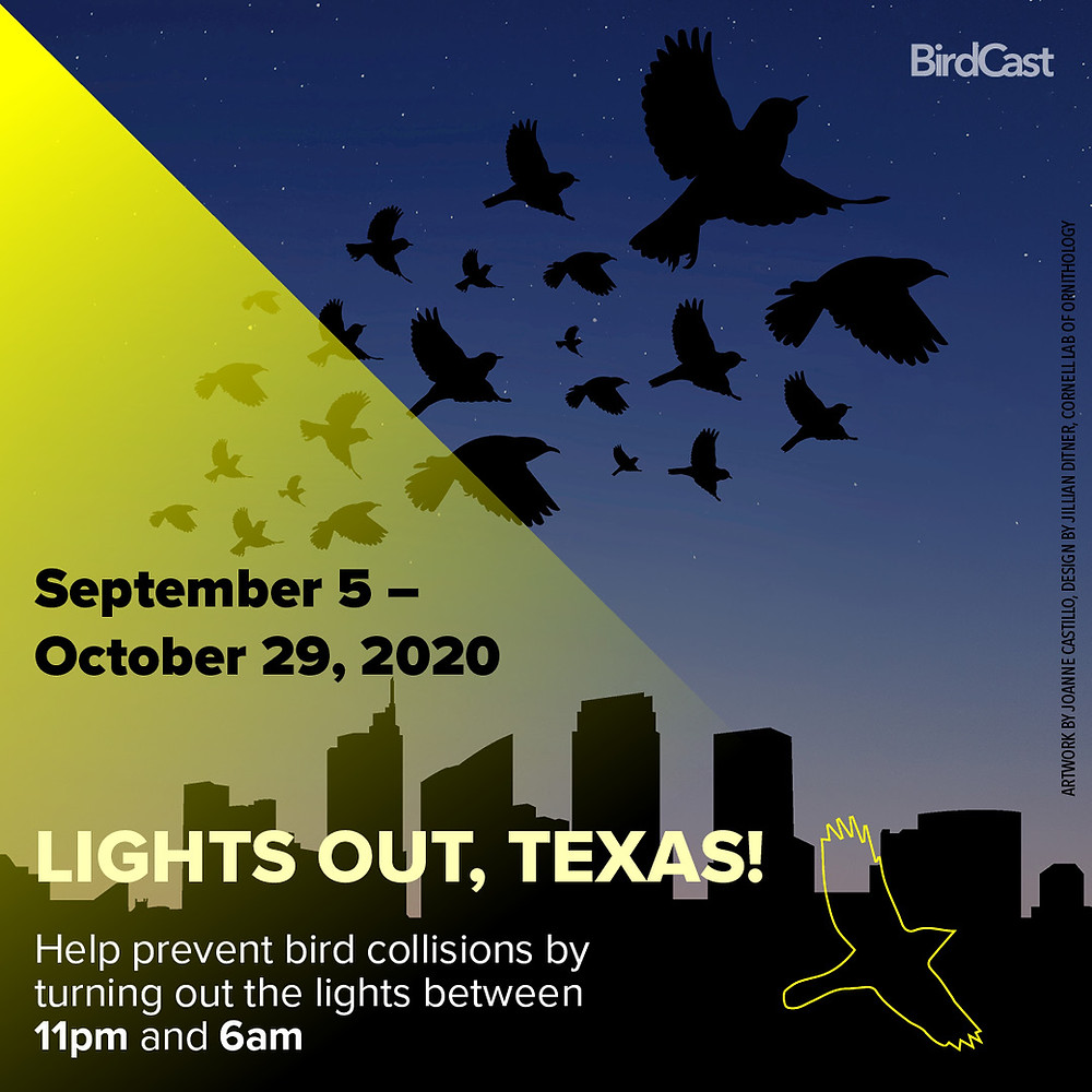Graphic image with illustrated silhouettes of birds flapping away from a bright street lamp shining on the Dallas skyline.