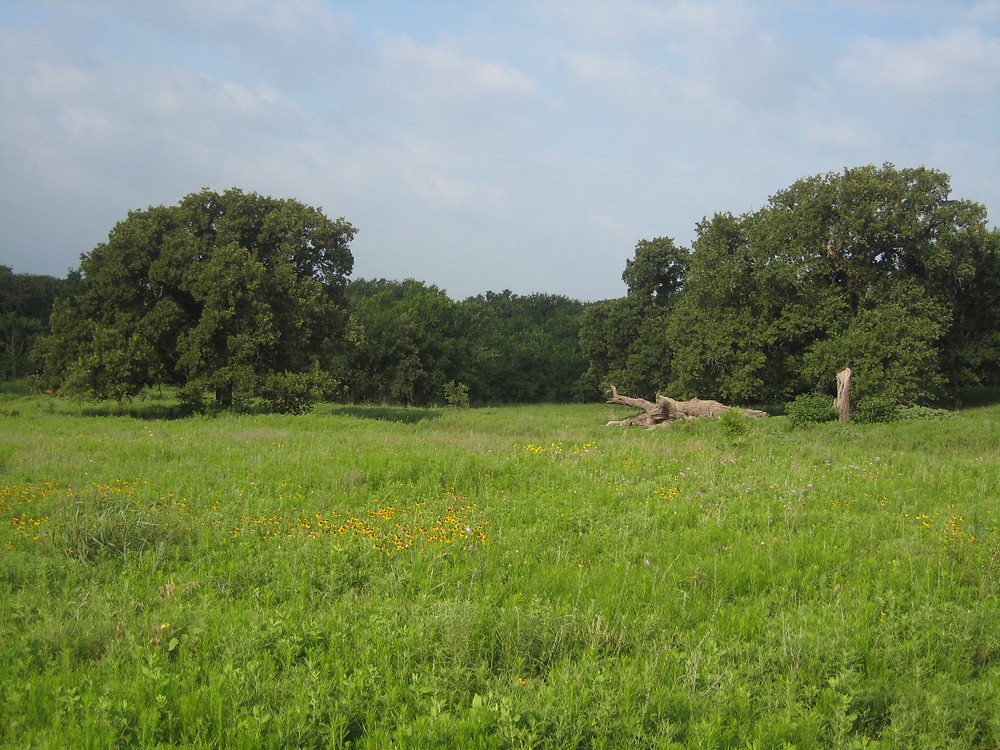 Image of a native tallgrass prairie in a large open Texas field. Over a thousand acres would be flooded if Ringgold Reservoir were to be built.
