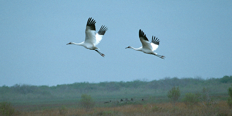 Annual Whooping Crane Festival 2021