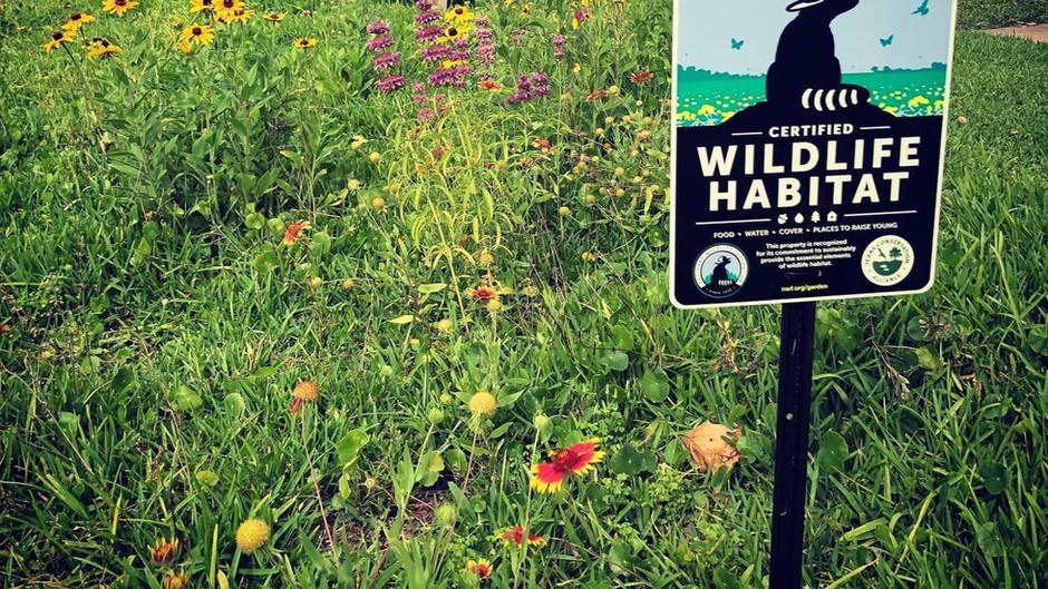 Garden for Texas Wildlife!