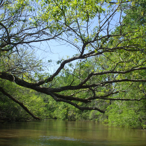 TCA and Friends of the Refuge invite you to discover the amazing habitat at the Neches River Refuge!