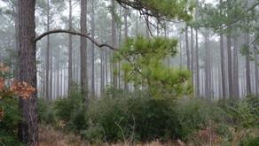 TCA Successes: Saving Forests
