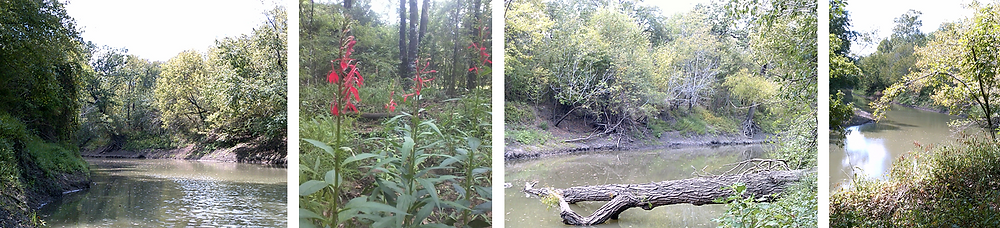 Four small pictures of the beautiful Sulphur River - two with views of the river flanked by thriving trees; one shows tall red flowers and one with a large tree trunk fallen over into the river.