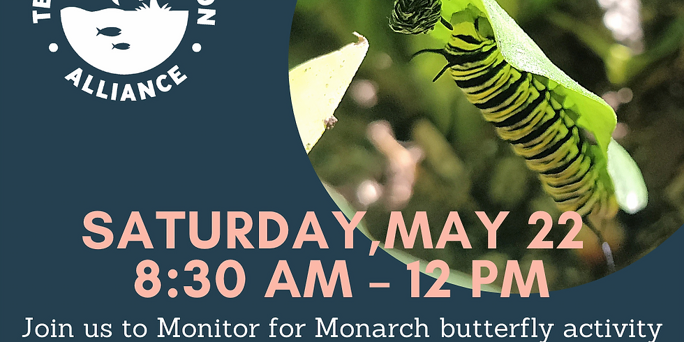 Monitor for Monarch butterfly activity and help restore the Trinity River in Dallas