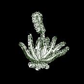 Aloe%20Vera%20Plant_edited.png