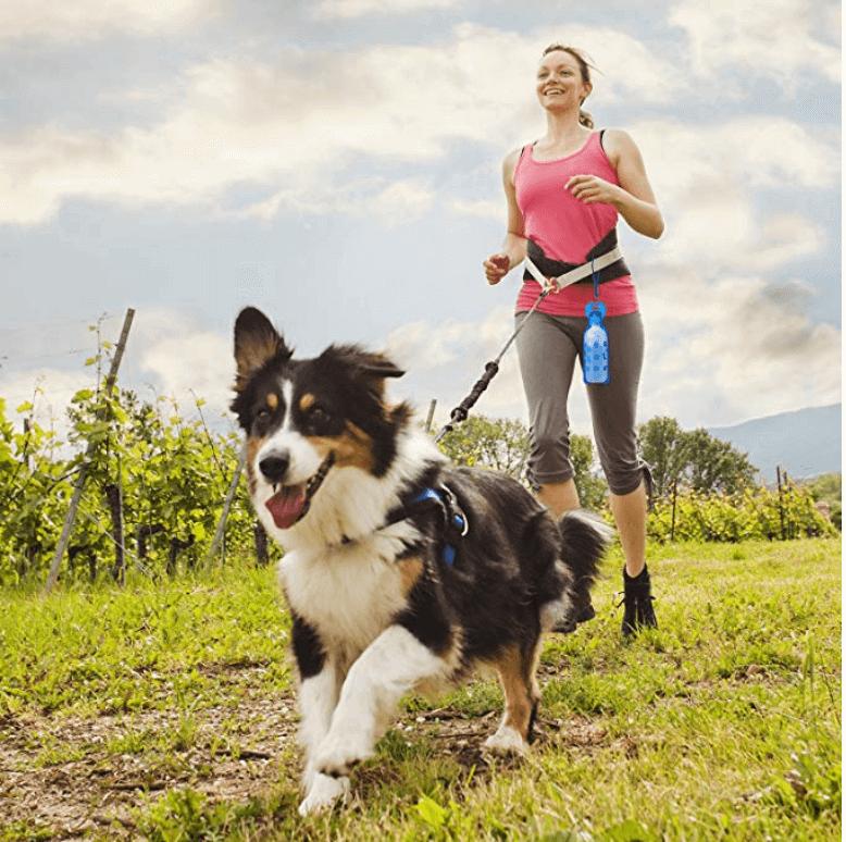 Gadgets Para Ir De Vacaciones con mascotas.png