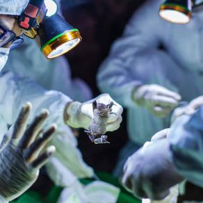 ¿Aún Tienes Dudas Sobre Coronavirus? Todas Las Respuestás Fundamentales