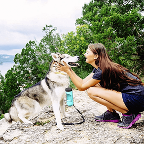 Las 5 Mejores Botellas Dispensadoras De Agua Para Viajar Con Tu Perro