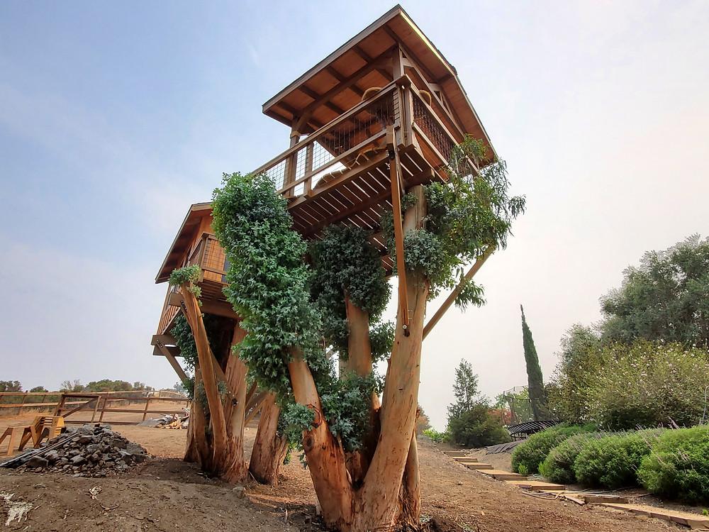 very high tree houses
