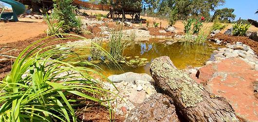 backyard-ponds-builders[1].jpg