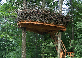 treehouse-nests.png
