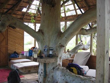 tree-inside-of-a-tree-house