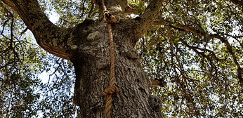 rock-climbing-on-tree