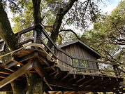 Family-Treehouse-designs