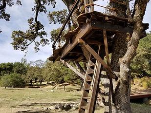 treehouse-platform-one-tree