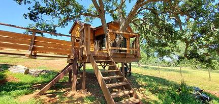 serendipi-TREE House