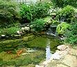 koi-fish-pond-builders.jpg