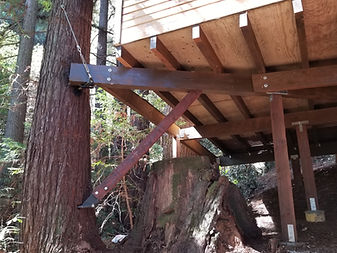 treehouse foundation