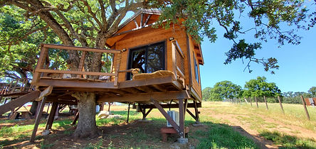 serendipi-treehouse-for-families