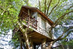 luxury-tree-houses